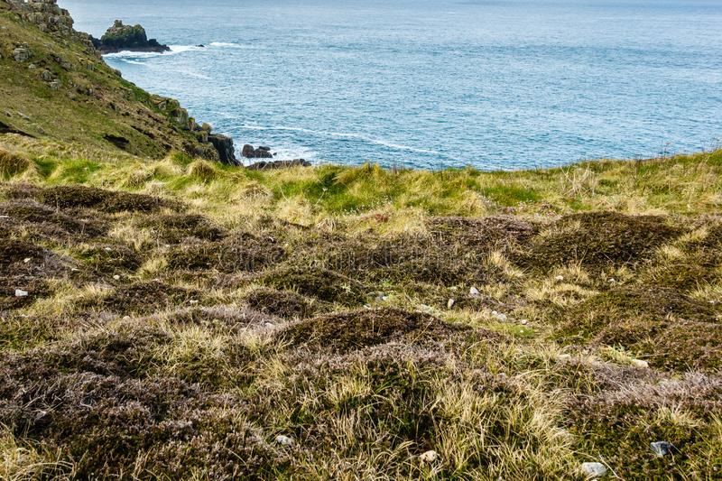 High seashore with green and brown grass. With brown lichens and small white flowers in the rocky meadow; in the background are blue sea waters royalty free stock photos