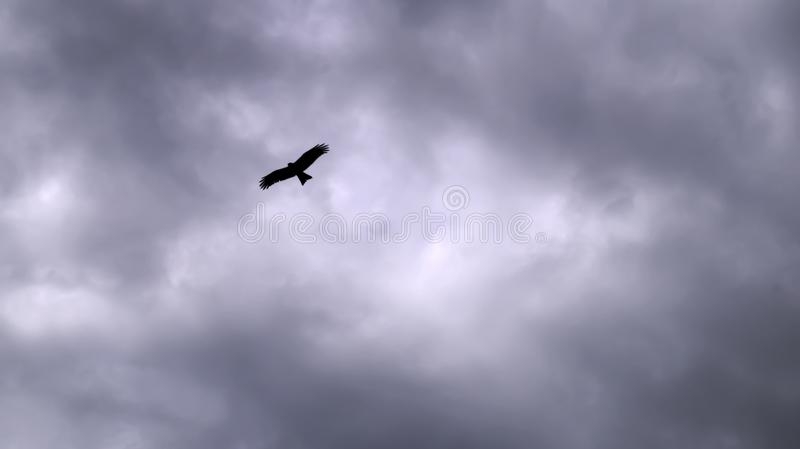 High in the sky in the clouds flying big black bird kite stock photos