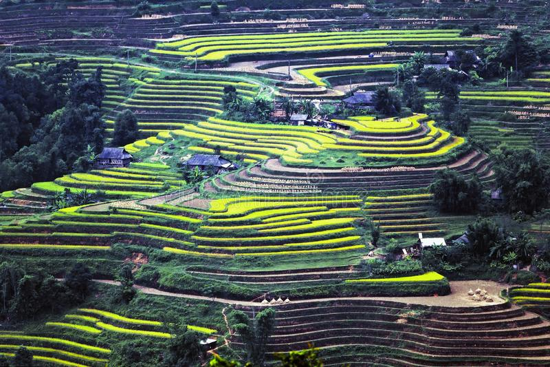 High slope terraces, typical of Hoang Su Phi royalty free stock image