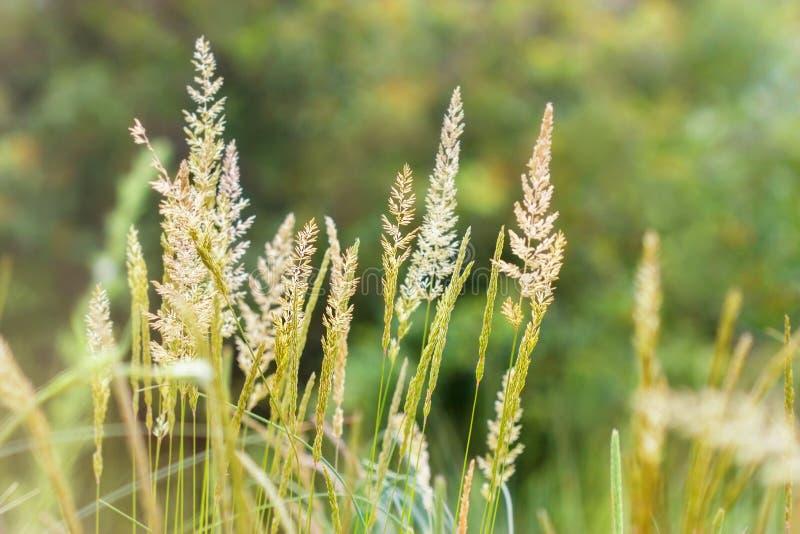 High spring grass. Beautiful nature - High spring grass stock photos