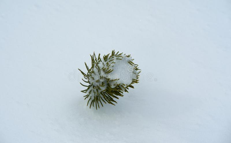 High Tatra plant detail in winter. High Tatra plant detail in Slovakia royalty free stock images