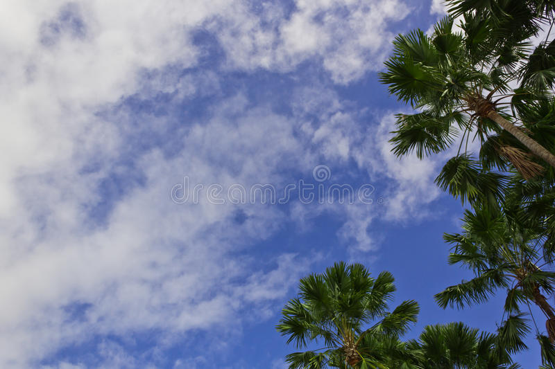 High Trees Royalty Free Stock Images