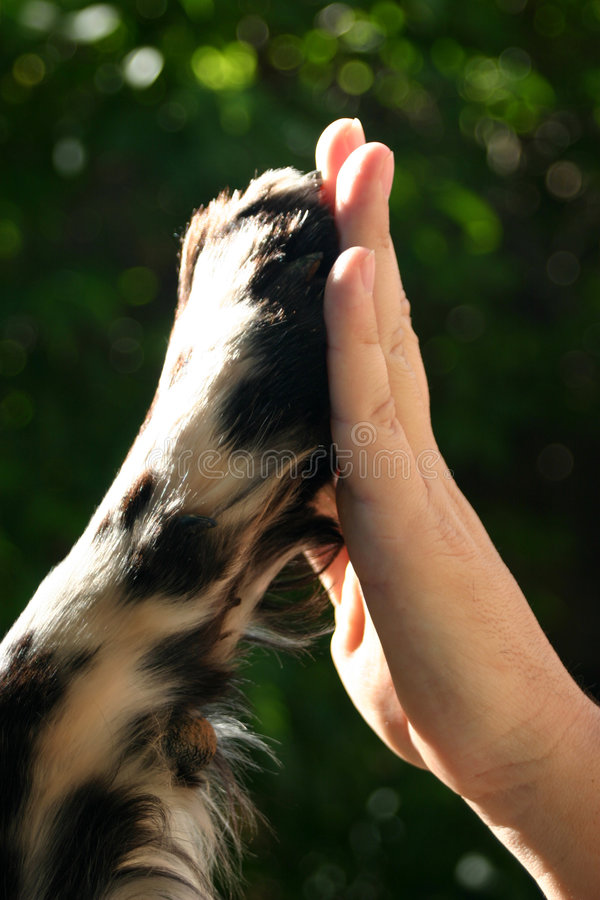 Highfive royalty free stock photo