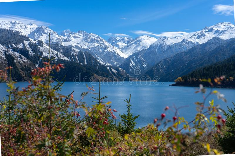 Highland lake landscape with background snowy mountain scene in autumn at Xinjiang, china. Copy space clear blue sky ice forest national park nature natural stock photos