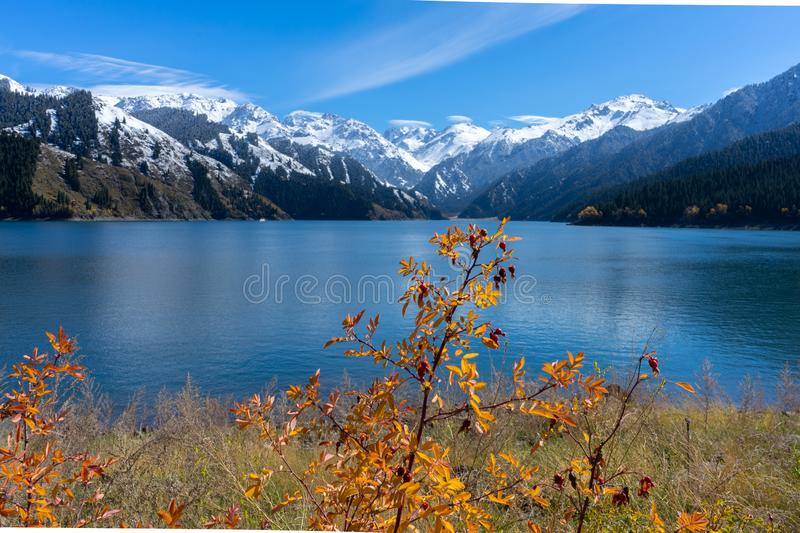Highland lake landscape with background snowy mountain scene in autumn at Xinjiang, china. Copy space, clear, blue, sky, ice, forest, national, park, nature stock photos