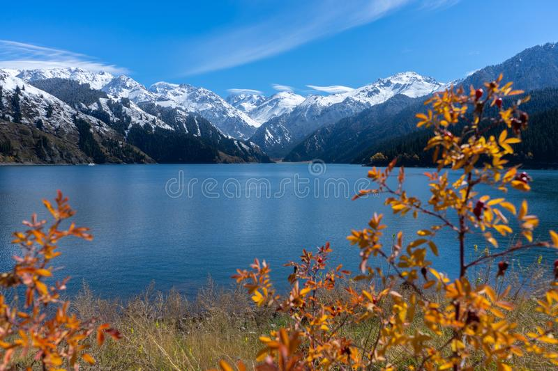 Highland lake landscape with background snowy mountain scene in autumn at Xinjiang, china. Copy space, clear, blue, sky, ice, forest, national, park, nature stock images