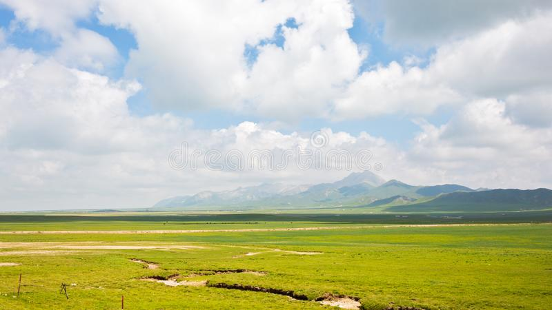 The highland meadows with white cloud and blue sky. The highland meadows with white cloud and blue sky at Qinghai province of China royalty free stock images