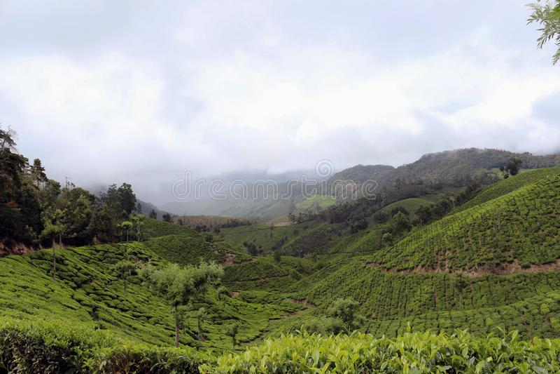 Highland, Vegetation, Hill Station, Hill stock image