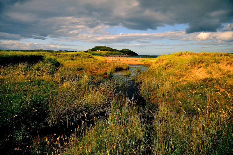 Highlands beach, Wester Ross, Scotland. Late evening, summer flowers and grasses, on Cove beach, on the shores of loch Ewe, Wester Ross, on Scotlands west coast royalty free stock image