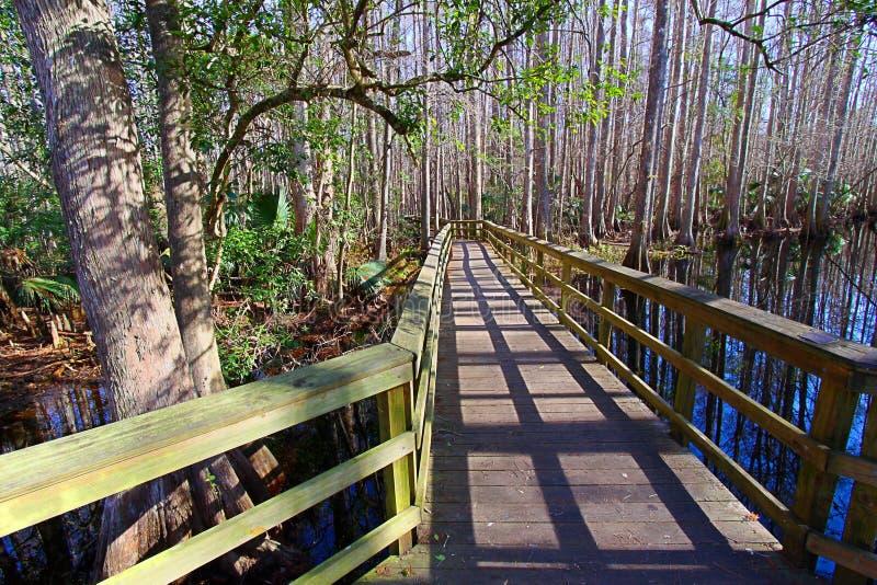 Highlands Hammock State Park Florida stock image