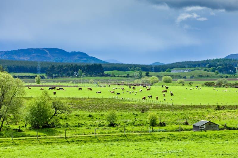 Highlands, Scotland stock images