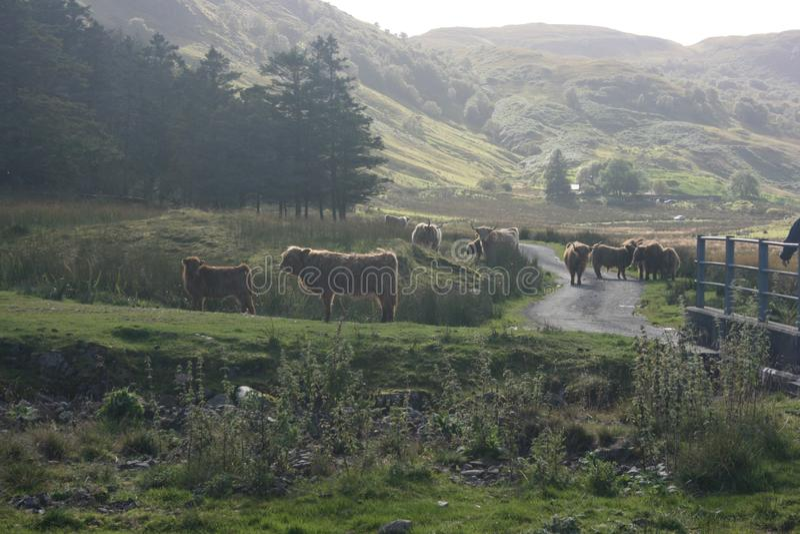 Highlands stock images