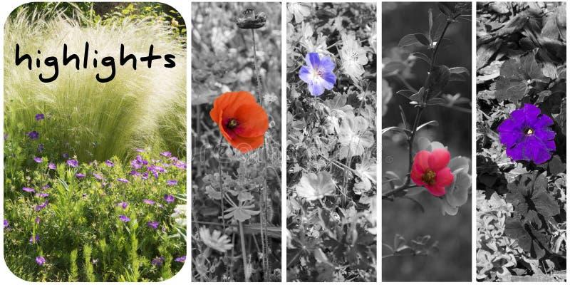 highlight fotografie stock libere da diritti