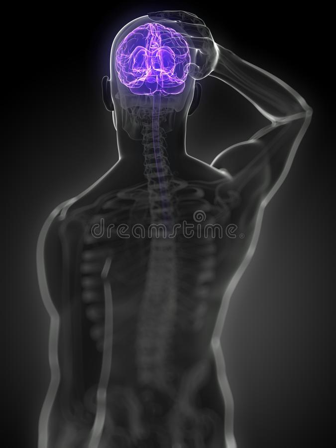 Download Highlighted brain stock illustration. Image of pose, abdomen - 23711231