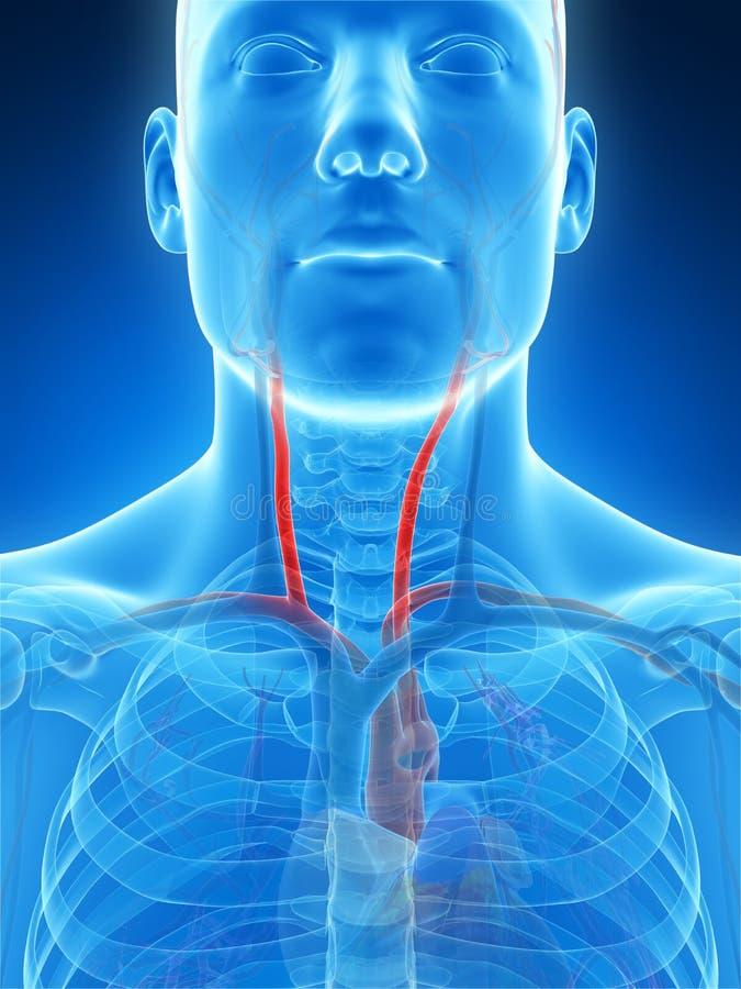 Highlighted carotid artery royalty free illustration