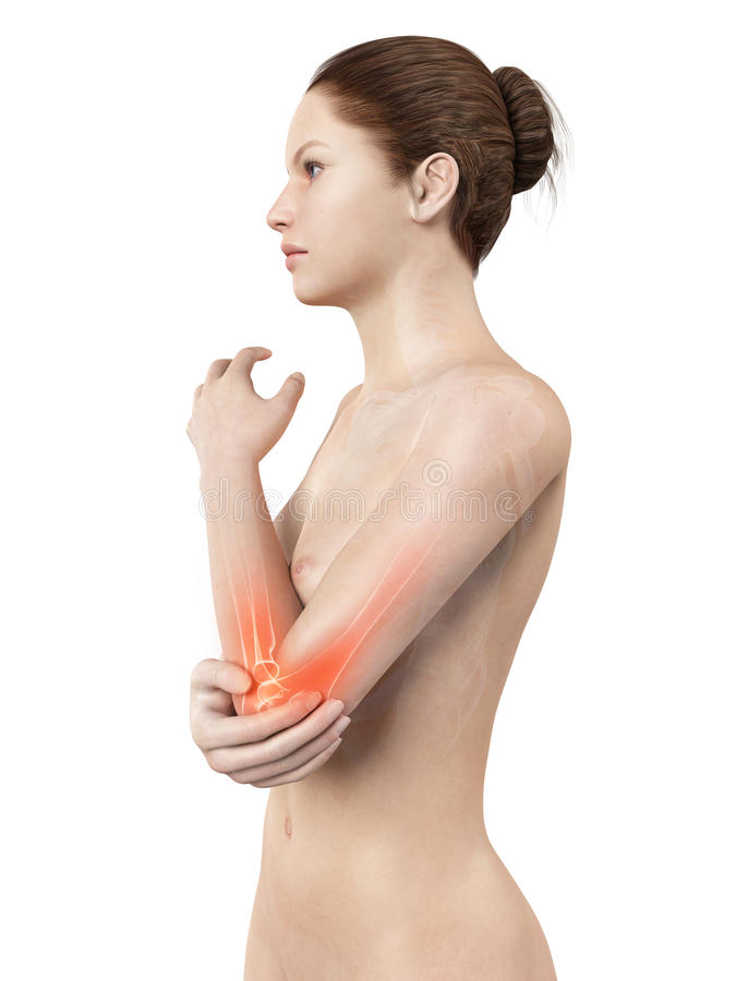 Highlighted elbow joint royalty free illustration