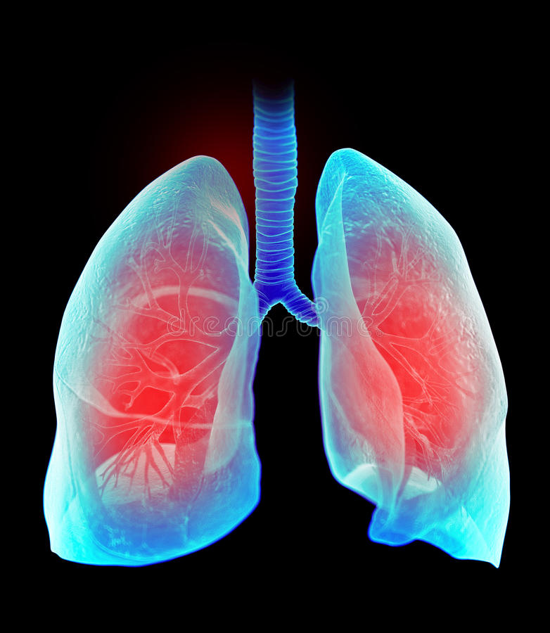 The highlighted human lung vector illustration