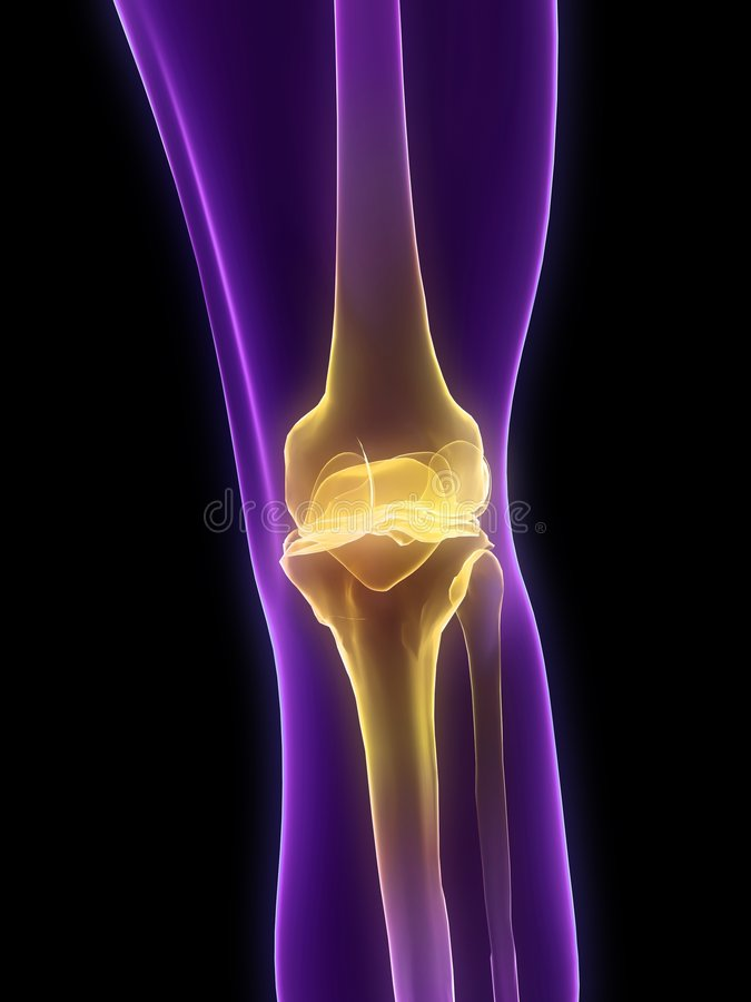 Download Highlighted Knee Royalty Free Stock Photography - Image: 7725717