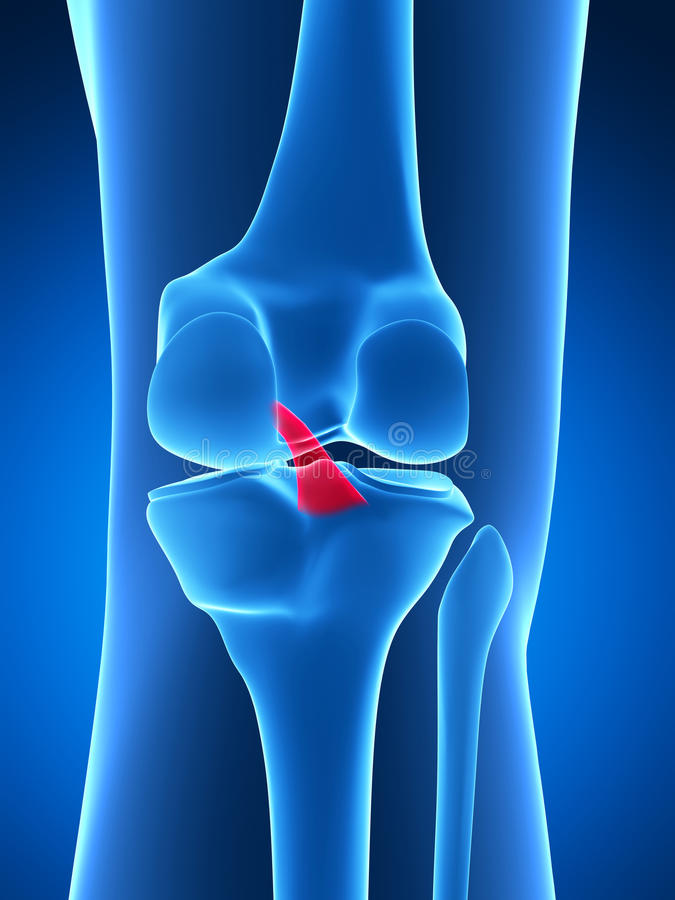Highlighted knee joint royalty free illustration