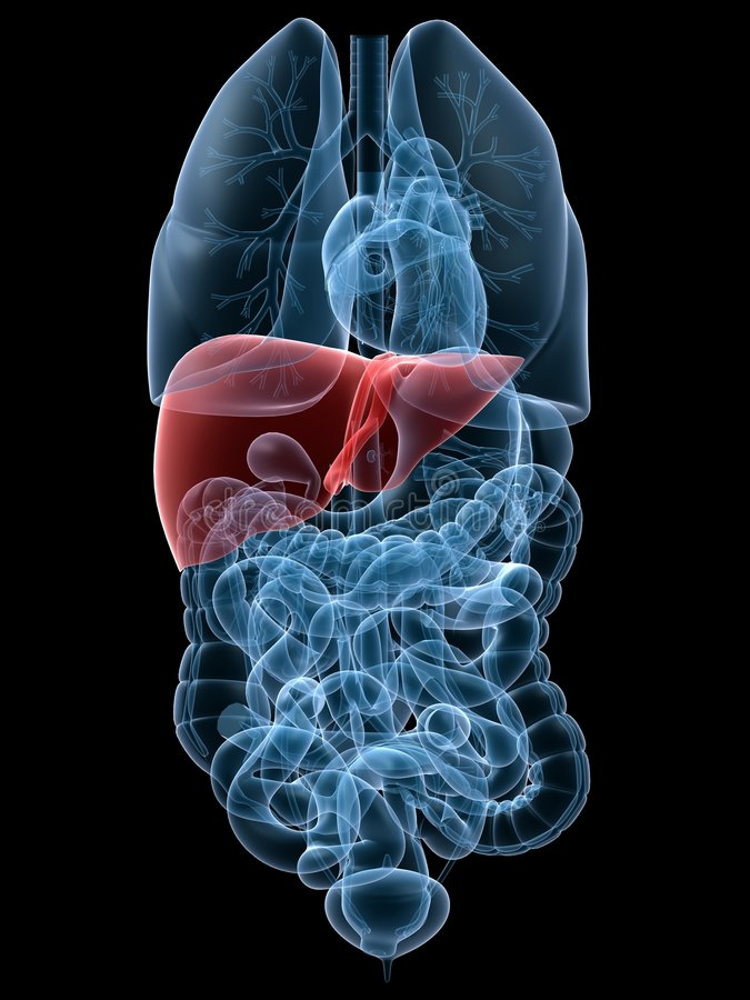 Highlighted liver stock images