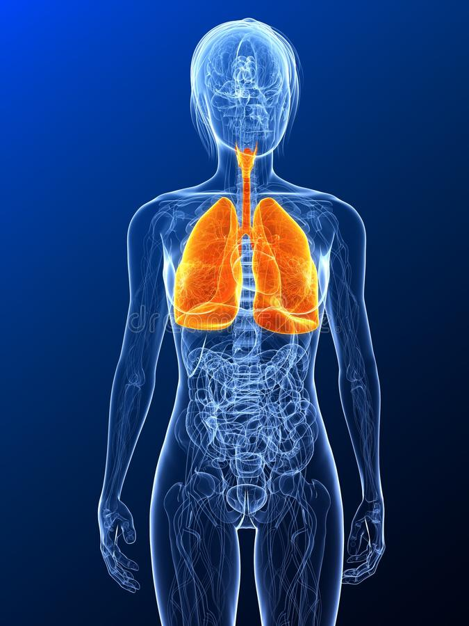 Download Highlighted lung stock illustration. Image of render - 14390332