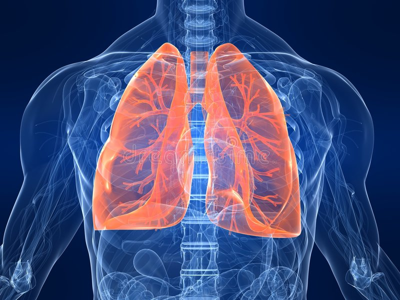 Highlighted lung. 3d rendered anatomy illustration of a human body shape with highlighted lung vector illustration