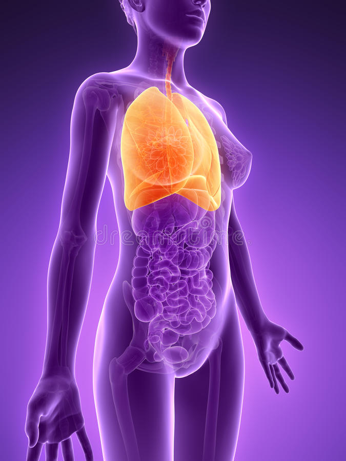 Download Highlighted Lung Stock Image - Image: 30723221