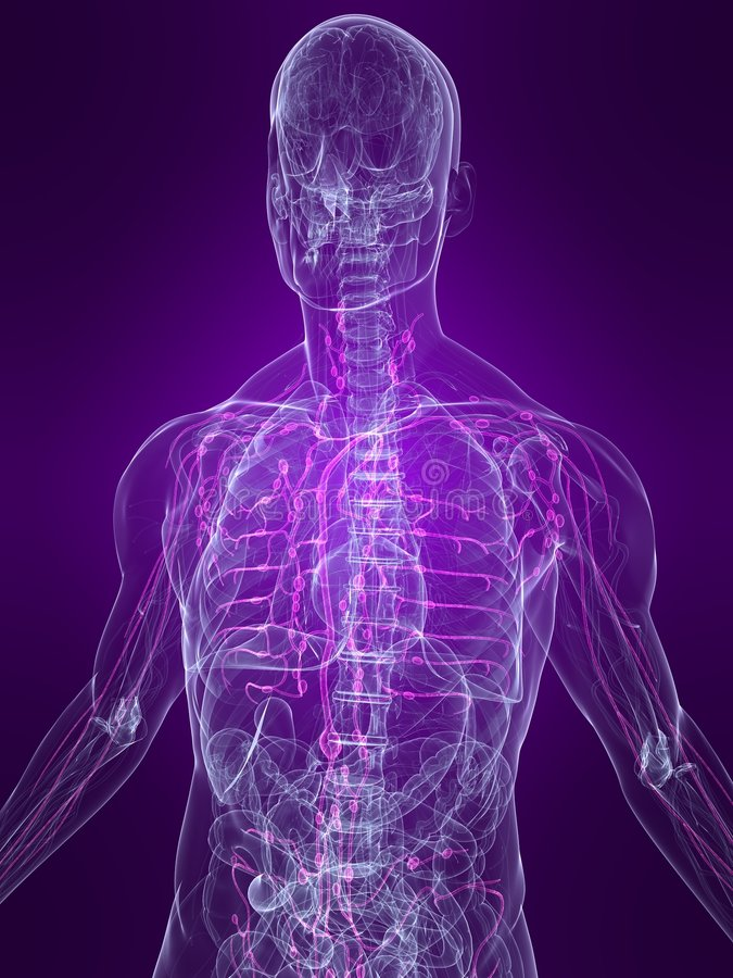 Highlighted lymphatic system royalty free illustration