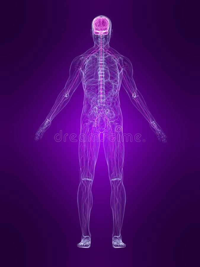 Download Highlighted nervous system stock illustration. Image of painful - 6534050