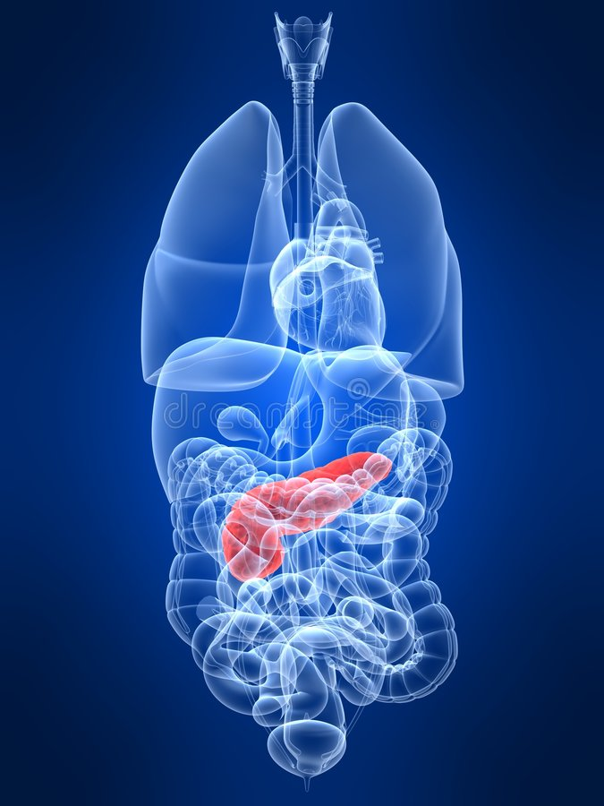 Highlighted pancreas stock illustration