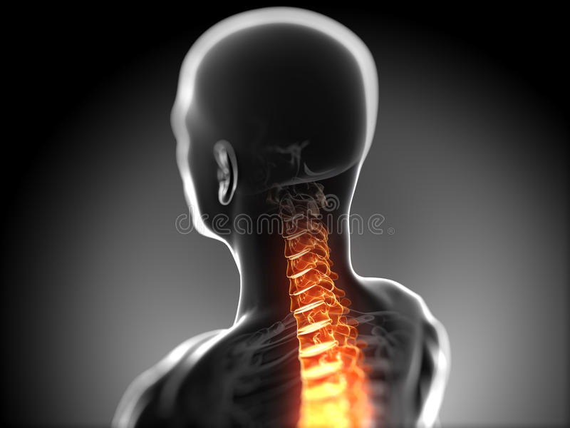Highlighted spine vector illustration