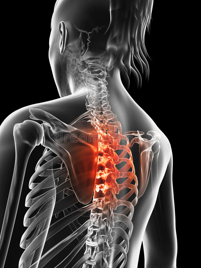 Highlighted thoracic spine stock illustration. Illustration of ...