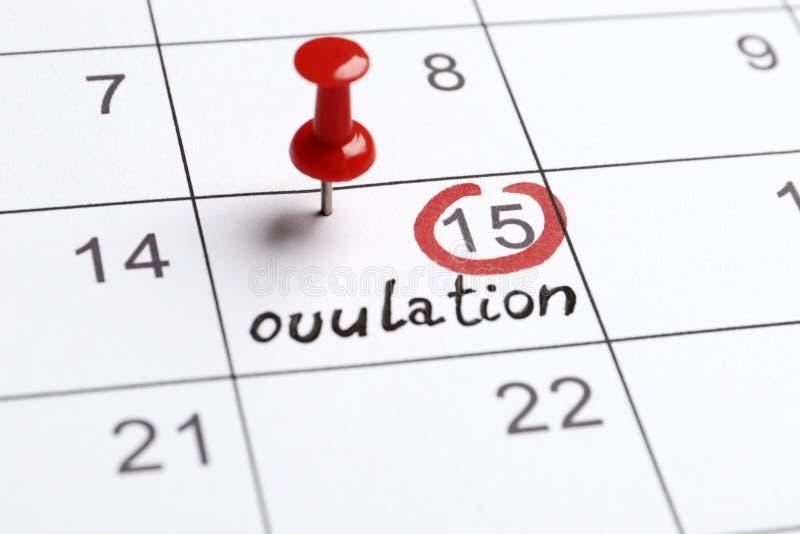 Highlighter vermelho com marca do dia da ovulação no calendário imagens de stock