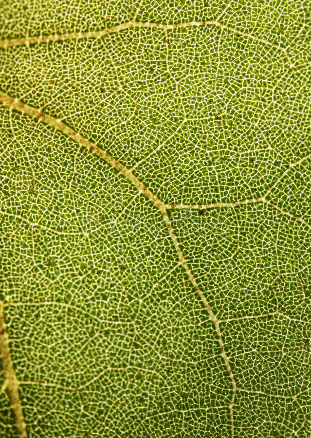 Download Highly Detailed Close Up Photo Of A Plant Foliage Stock Photo - Image: 23720728