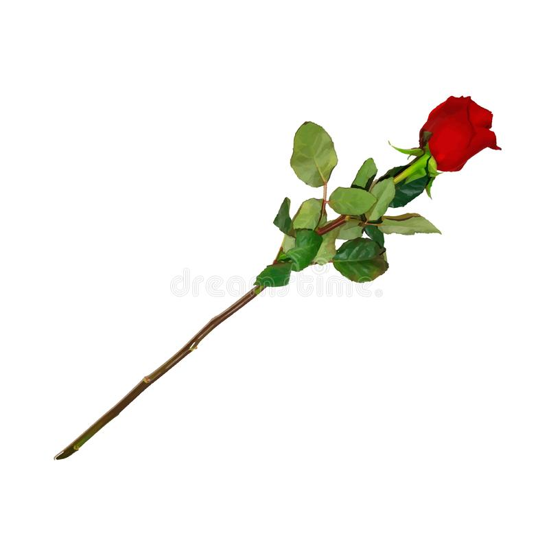 Highly Detailed Flower of Red Rose on Long Stem. Photo Realistic, Highly Detailed Flower of Red Rose on Long Stem Isolated on White Background. Beautiful Bud of royalty free illustration