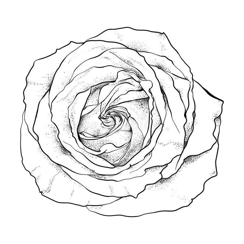 Highly Detailed Hand Drawn Rose Stock Vector Illustration of drawn