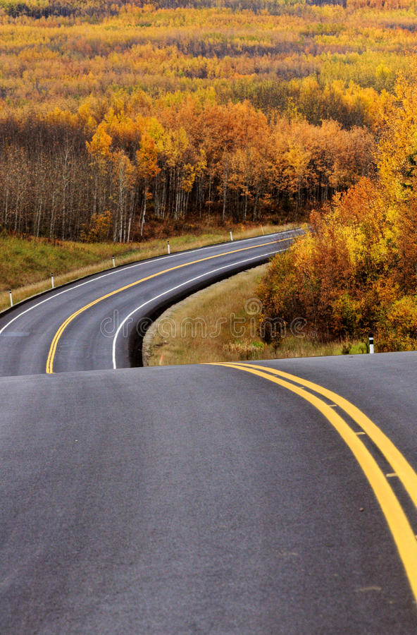 Download Highway Approching Aspen Forest Stock Image - Image: 14857855