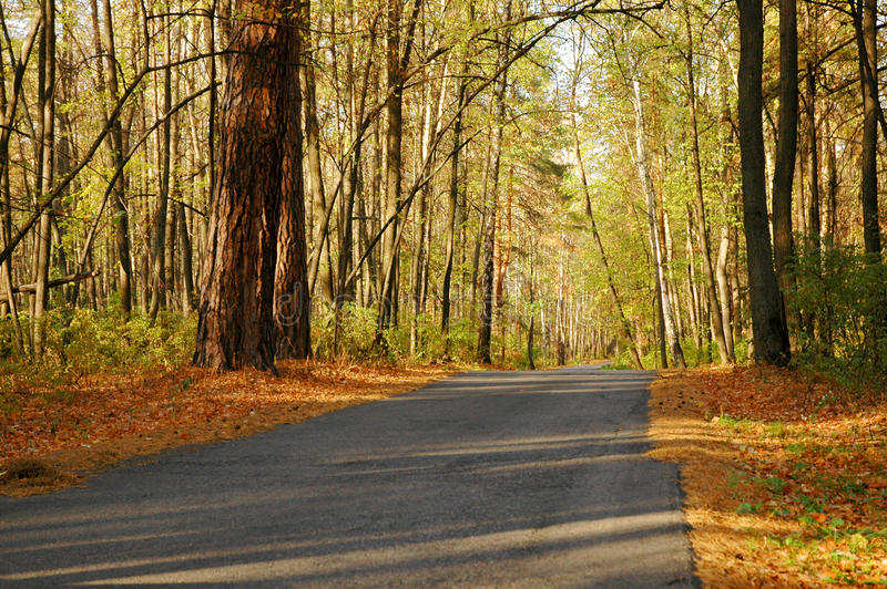 Download Highway In Autumn Wood Stock Photos - Image: 22971503