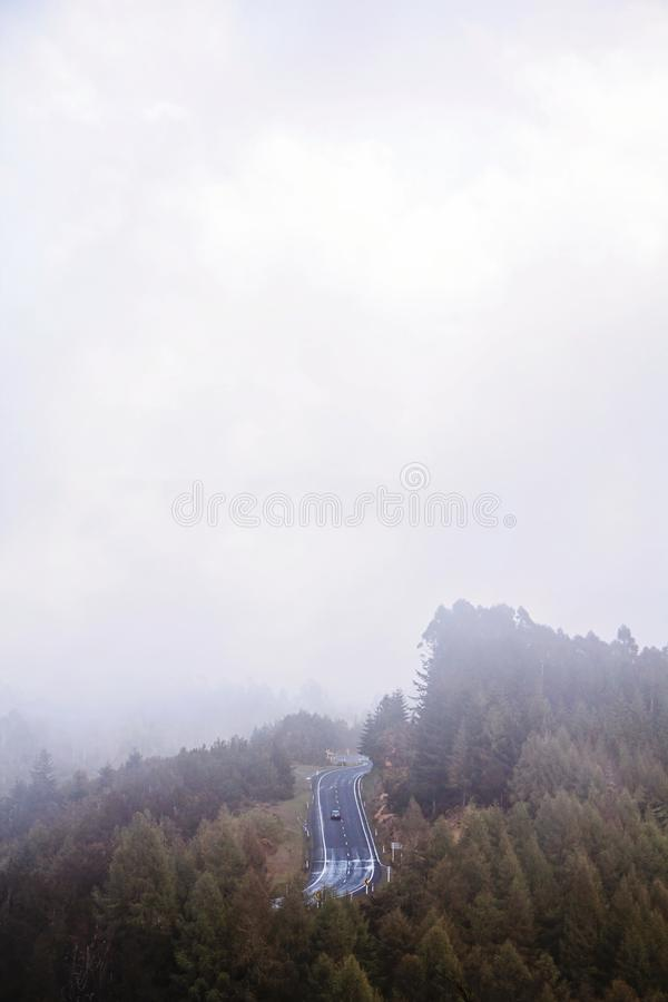 Highway in the Middle of Forest Covered in Fog stock photo