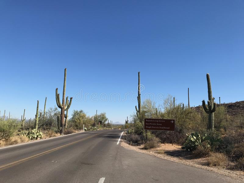 Highway through Saguaro National Park, Arizona stock photos
