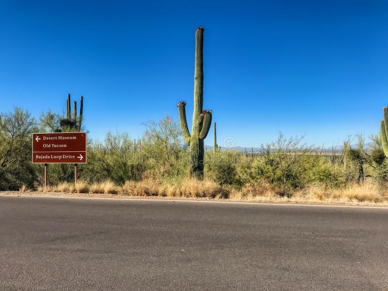 Highway through Saguaro National Park, Arizona stock images