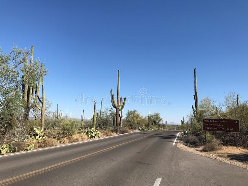Highway through Saguaro National Park, Arizona stock photo