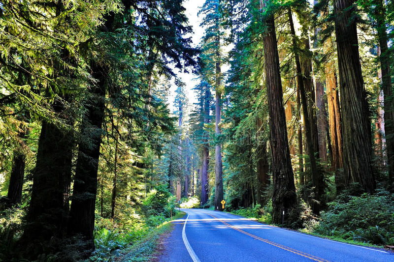Highway through sequoia forest. In North California, summer time stock image
