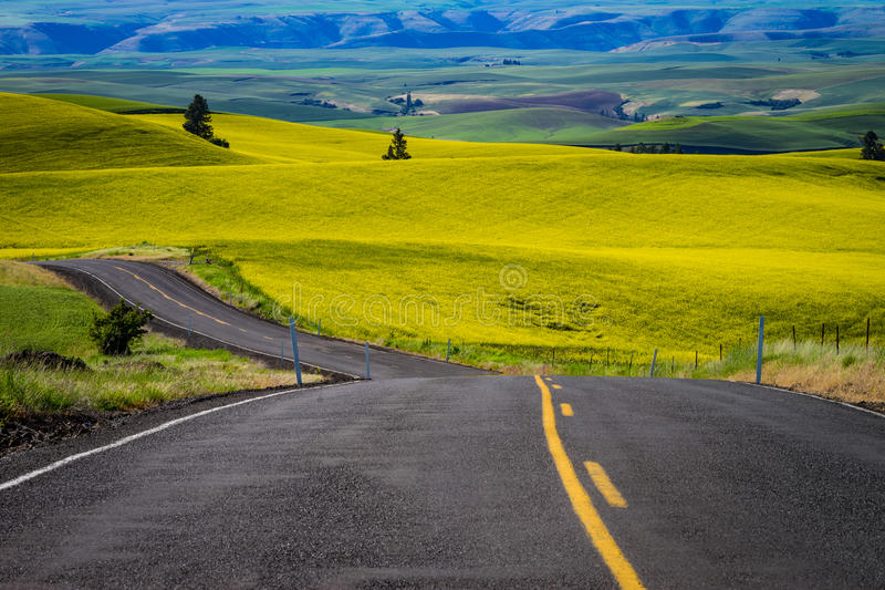 Highway through yellow canola fields in Eastern Washington state stock image