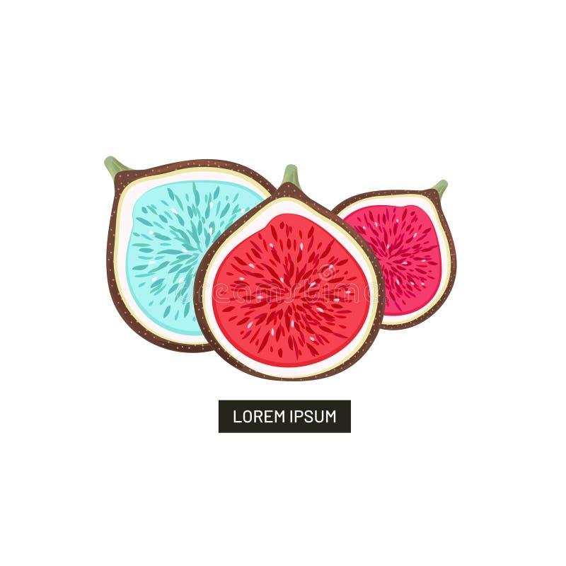 Higos varicoloured abstractos de las mitades Frutas dibujadas mano aisladas en blanco Puede ser utilizado para el paquete del dis stock de ilustración