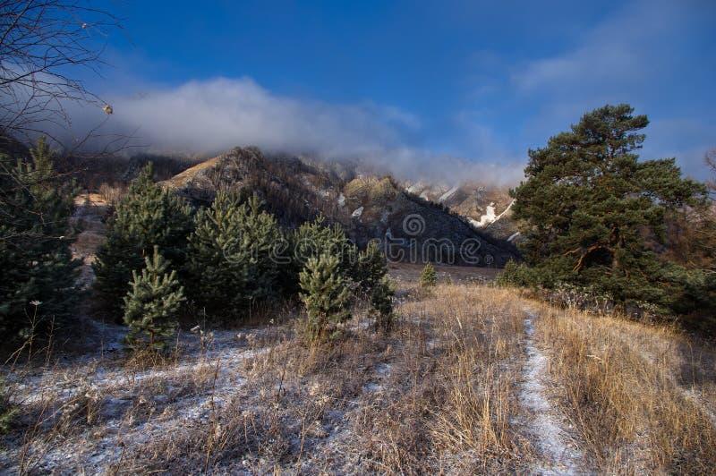 Hij sleept over het gebied met vorst behandeld gras onder pijnboombomen op de achtergrond van rotsachtige bergen onder blauwe hem royalty-vrije stock afbeelding