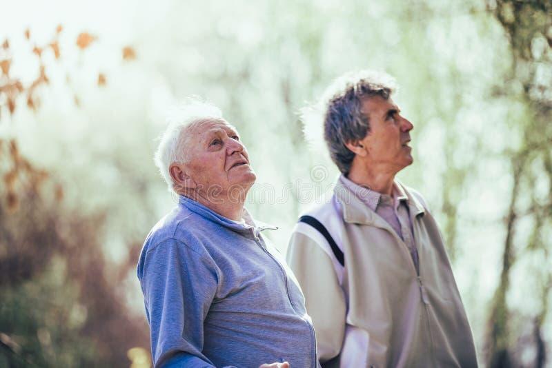 Hijo adulto que camina con su padre mayor en el parque imagenes de archivo