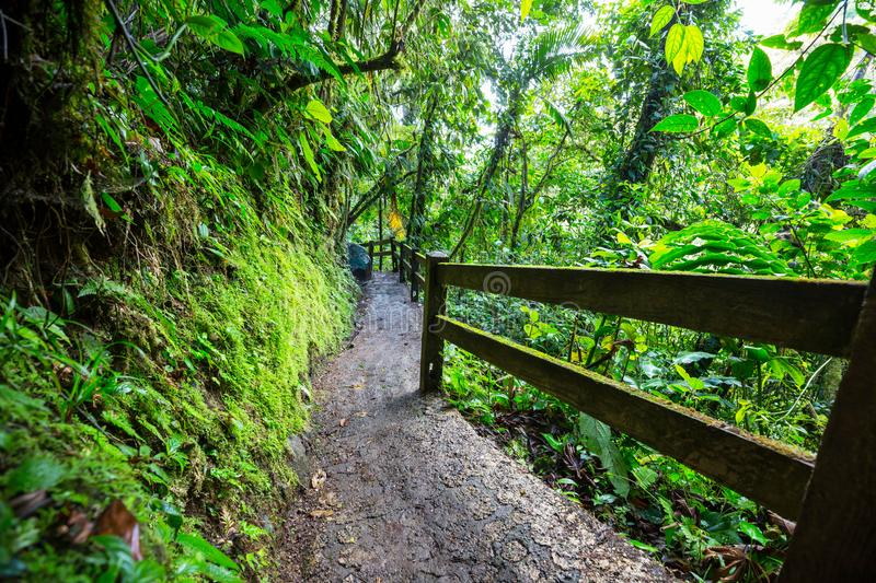Hike in Costa Rica. Hiking in green tropical jungle, Costa Rica, Central America royalty free stock photos