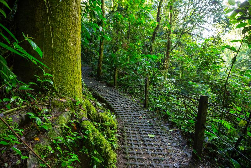 Hike in Costa Rica. Hiking in green tropical jungle, Costa Rica, Central America stock photos