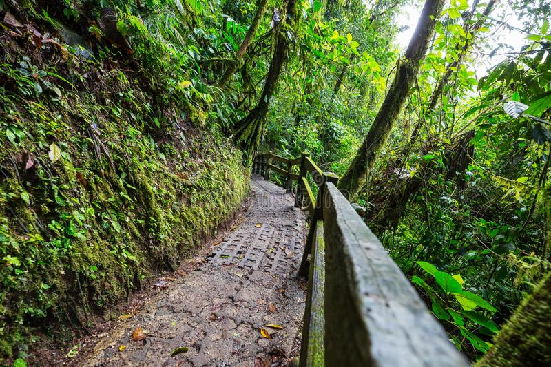 Hike in Costa Rica. Hiking in green tropical jungle, Costa Rica, Central America stock photography